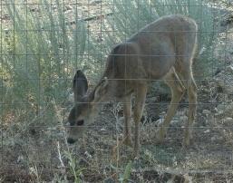 Baby-Deer-photo-Avadian